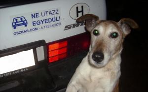 Telekocsi kutyával