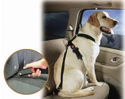 Kutya biztonsági öv (hám)