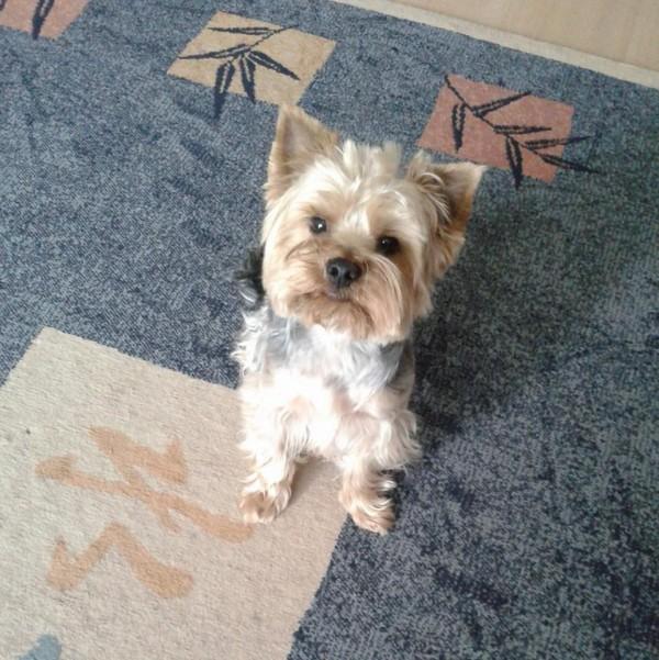 Atika, az első ismert önálló kutya-utas az Oszkáron